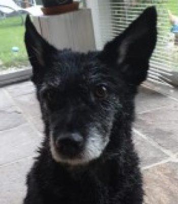 Profilbild von Bownie